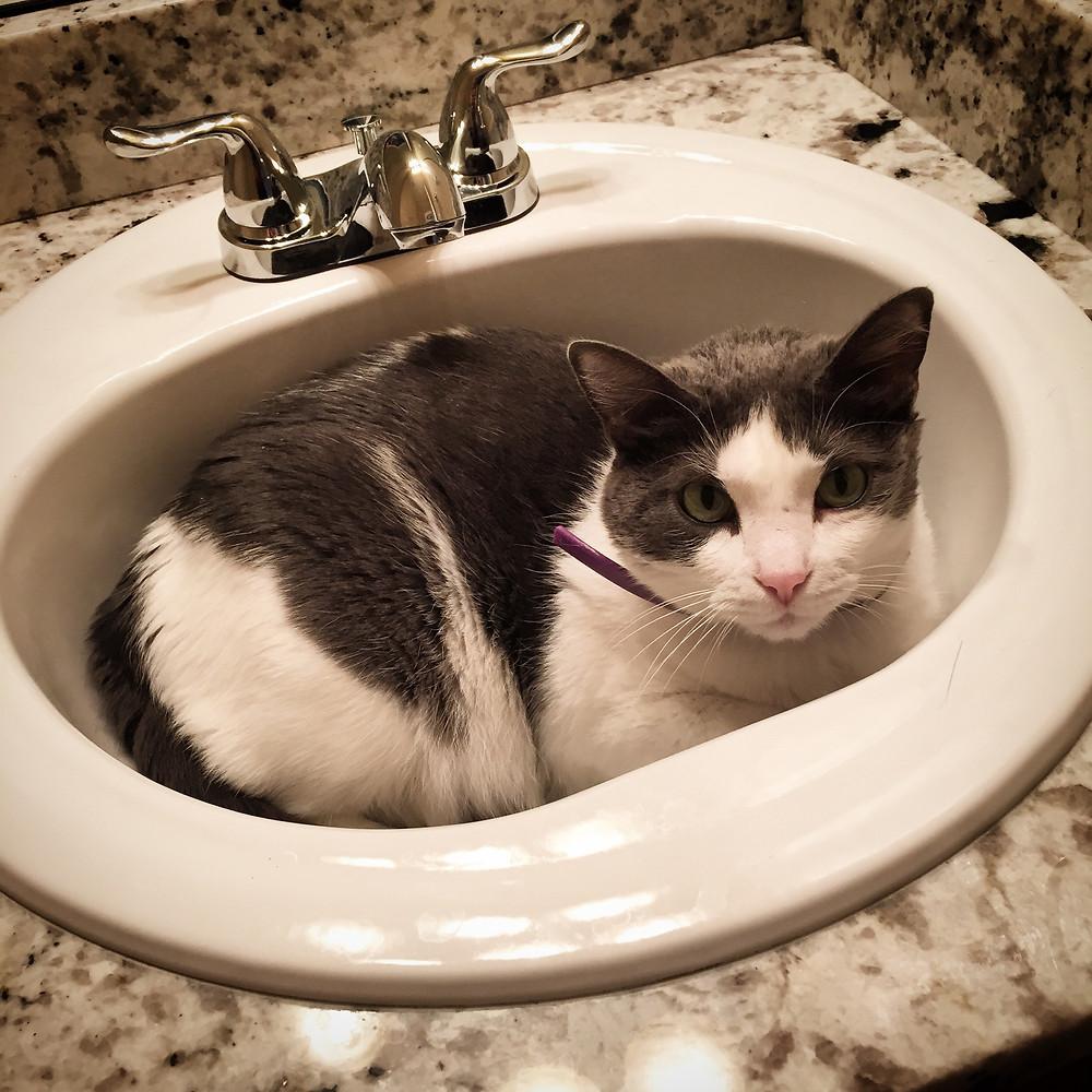 Blooie hiding in the bathroom sink