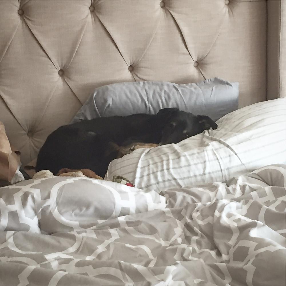 Neko sulking while I am away (on my pillows no less)
