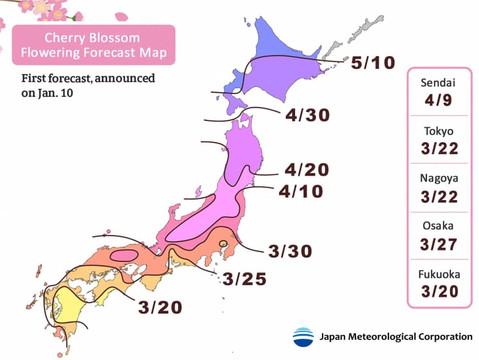 """Прогноз цветения вишни """"Сакуры"""" в Японии по регионам 2019"""