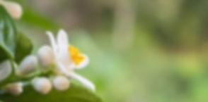 Fleurdoranger_edited.jpg