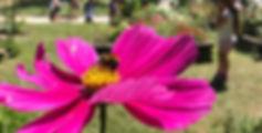 IMG_3532_edited_edited_edited.jpg