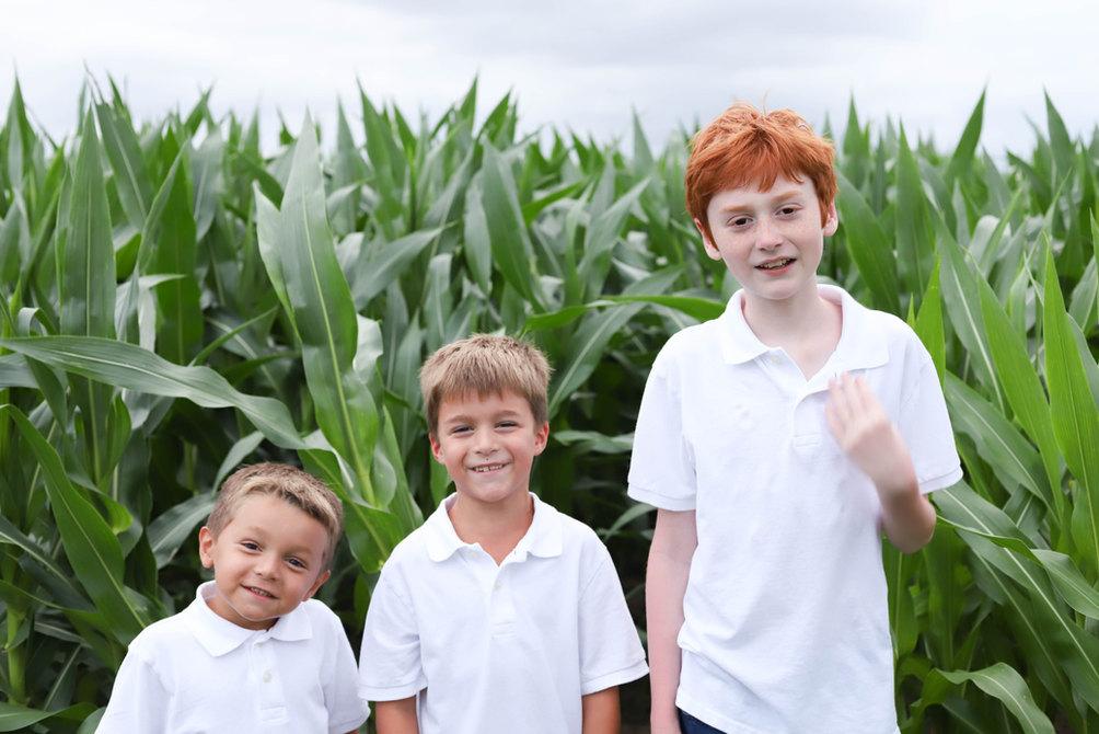 cornfield minis