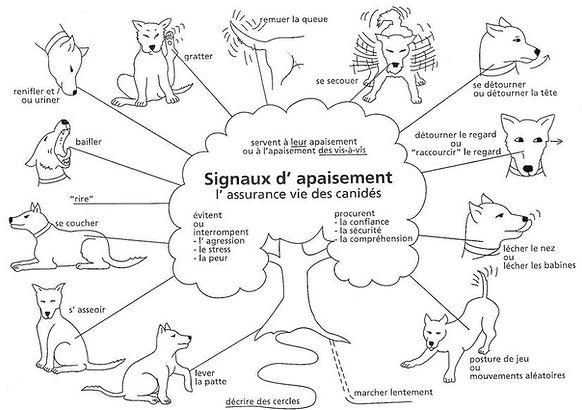 Les signaux d'apaisement, mieux adopter un chien de roumanie