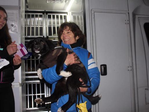 12 janvier 2019 : 36 chiens sauvés de Roumanie