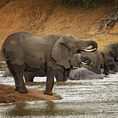 Travel_To_South_Africa_Zephyr_Travel_Cur