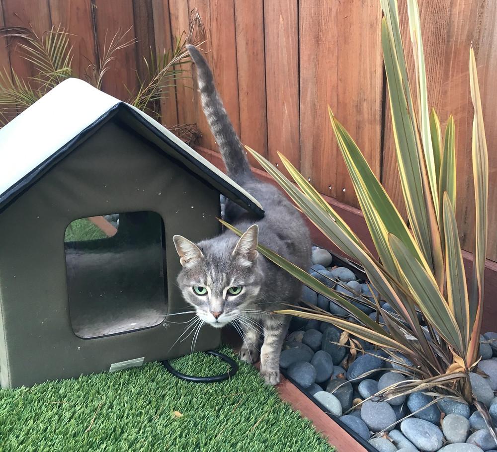 Alameda Emeryville Rockridge Piedmont Cat Sitting Outdoor Cat Area