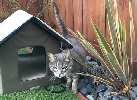 Should I let my cat outdoors?