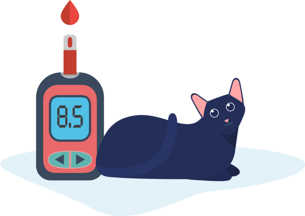 sitting cat and blood glucose mete