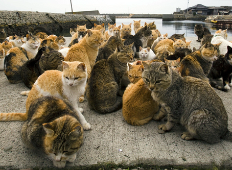 "What is Japan's ""Cat Island""? All about Aoshima"