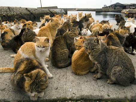 """What is Japan's """"Cat Island""""? All about Aoshima"""