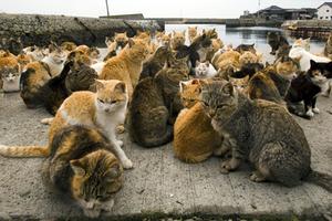 San Francisco and Oakland Cat Sitting Blog