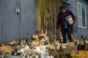 Berkeley and Alameda Cat Sitting Blog Precious Fur