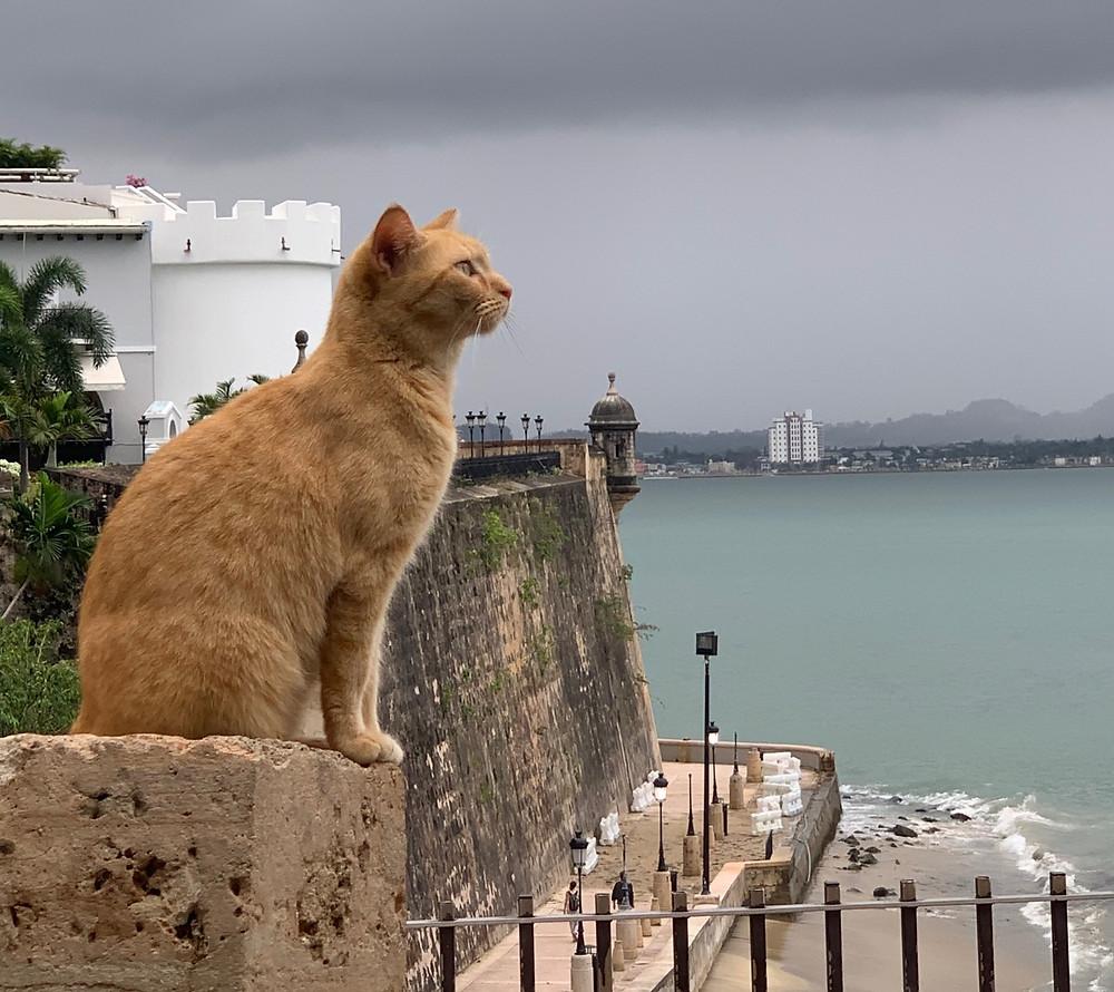 San Francisco Oakland Berkeley Cat Sitting Outdoors