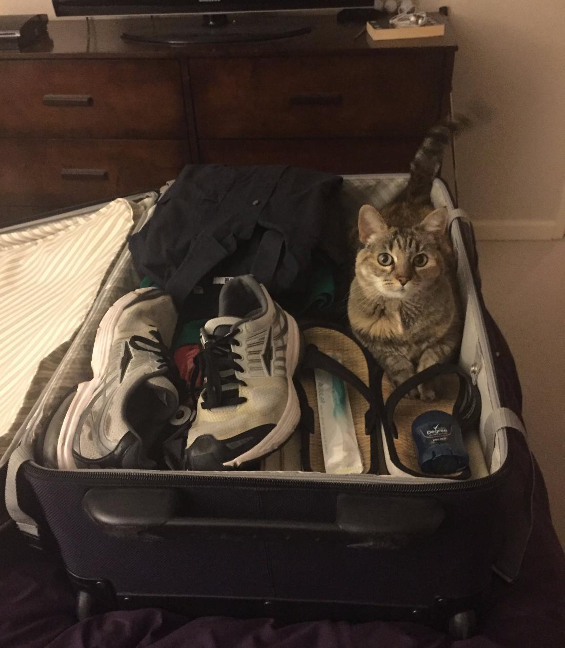 Cat Sitting San Francisco | Home | Precious Fur