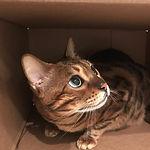 Cat Sitters San Francisco Kitty hiding in box