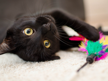 Why Are Black Cats Considered Bad Luck? The History Behind the Myths