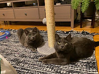 Professional cat sitters taking care of two cats