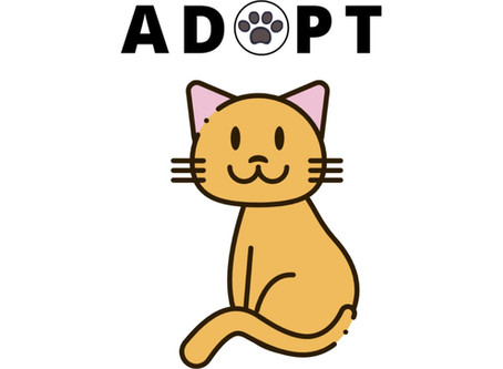 Getting a new cat? Where to adopt!