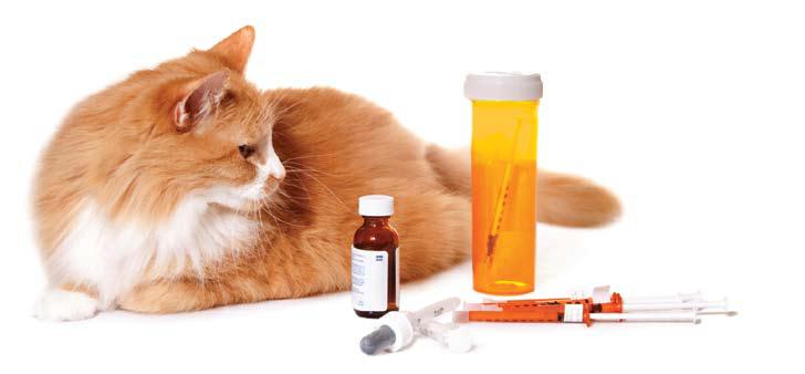 Medication for diabetic cat