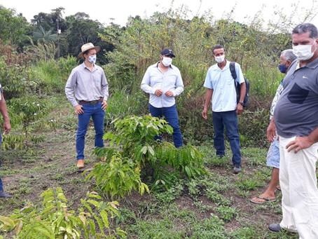 Prefeitura faz vistoria na cultura do café clonal no projeto de assentamento Arco íris