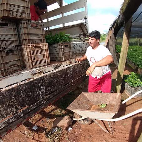 Prefeitura de Feijó incentiva produção rural com café clonal