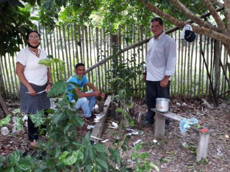 Propriedades rurais de Rodrigues Alves recebem enxertia de citros