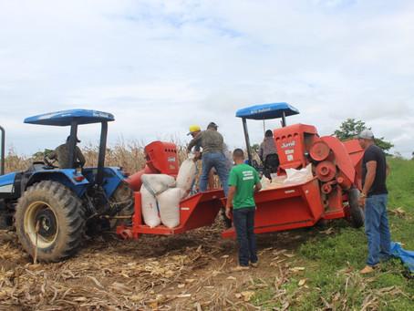 Prefeitura de Brasileia Inicia colheita do milho