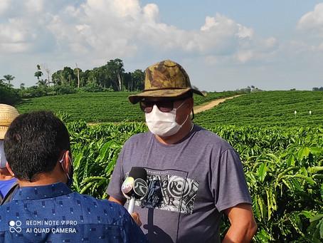 Plantio de café Clonal do deputado Jonas é laboratório e incentivo para agricultores de Mâncio Lima