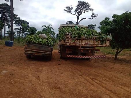 Prefeitura auxilia os produtores e agricultores acrelandenses no escoamento da produção