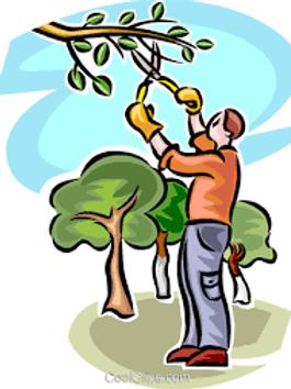 Poda de Árvores em Espaços Públicos Municipais