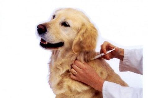 Vacinação Antirrábica para Cães e Gatos