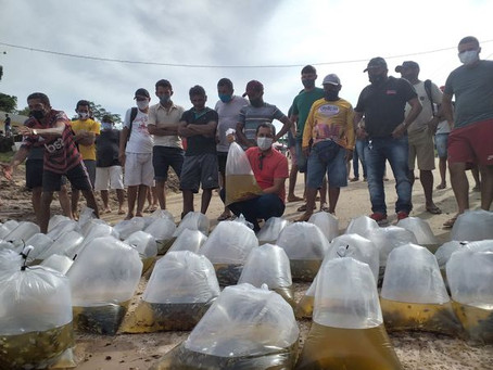 Prefeitura de Marechal Thaumaturgo realiza 2° entrega de alevinos a piscicultores do município