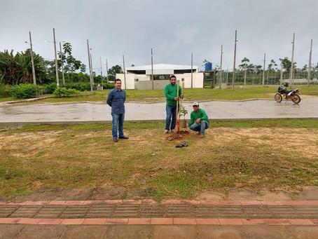 Prefeitura inicia arborização da praça da juventude com plantios de mudas de Ipê