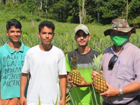 Rodrigues Alves-Com o plantio consorciado, prefeitura fortalece e diversifica produção agrícola
