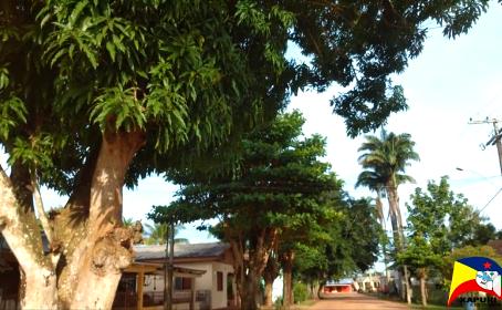 Prefeitura realiza arborização e ornamentação na estrada da Borracha e demais locais do município