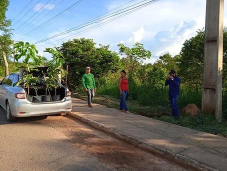 Prefeitura inicia Programa de Arborização na entrada da cidade