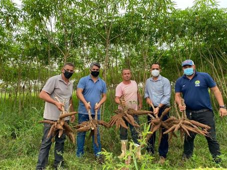 Prefeitura leva apoio aos produtores rurais do Ramal da Limeira e incentivo a plantação de mandioca