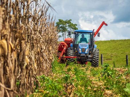 Prefeitura de Brasileia comemora a colheita da safra de milho com a produção de mais de 28 mil sacas