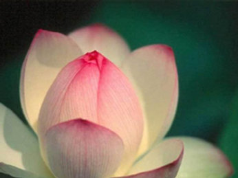 Create Lasting Love and Prosperity