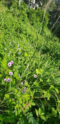 Small purple flowers at Casa Arcoiris Zi