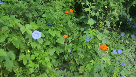 Wild flowers at Casa Arcoiris Zihuatanej