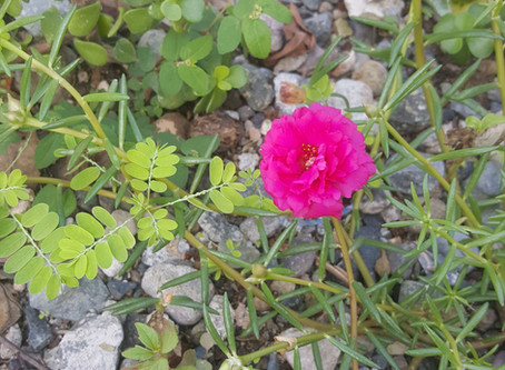 Zihuatanejo's October flowers