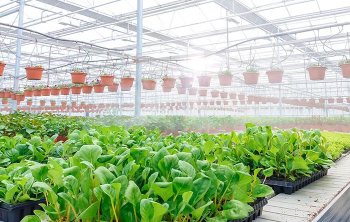 Plants-colour