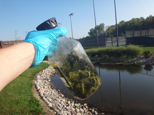 Day 1 (9/24/17) - Algae Collection