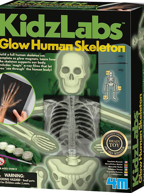 KidzLabs Glow Human Skeleton