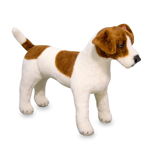 Giant Jack Russell Terrier Dog
