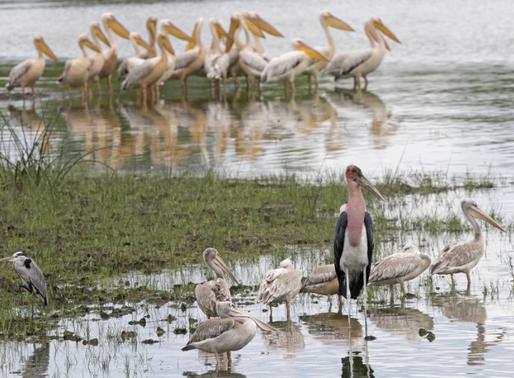 Safari operator conducts bird-mapping survey in Botswana