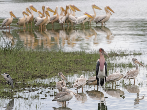 Safari operator conducts bird-mapping survey in Botswana