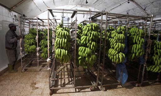 Algeria turns to bananas in trade gap battle