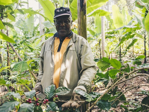 Africa's coffee farmers are losing $1.47bn a year to exploitative pricing